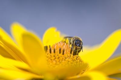 Bee Health Image